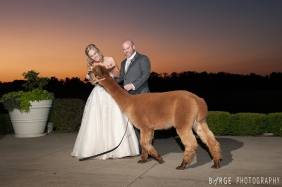 Bride, Groom and Llama